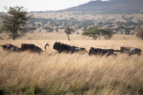 Vintage African Safari Photos: Africa With A View   Travel